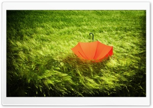 Umbrella HD Wide Wallpaper for Widescreen