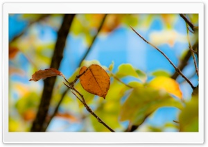 Unclarity Leaf HD Wide Wallpaper for Widescreen