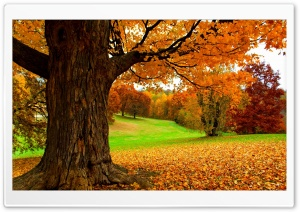 Under a Yellow Tree HD Wide Wallpaper for Widescreen