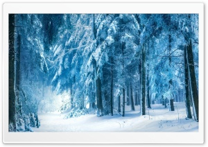 Under Heavy Snow HD Wide Wallpaper for Widescreen