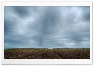 Under The Grey Clouded Winter Sky HD Wide Wallpaper for Widescreen