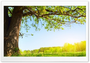 Under The Tree HD Wide Wallpaper for Widescreen