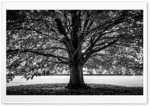 Under the Tree, Black and White HD Wide Wallpaper for 4K UHD Widescreen desktop & smartphone