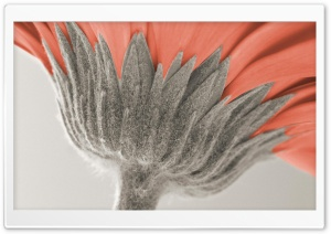 Underside View Of A Daisy HD Wide Wallpaper for Widescreen