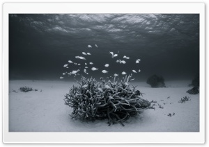 Underwater Black and White HD Wide Wallpaper for Widescreen