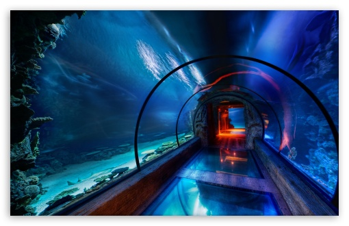 Underwater Passage, Las Vegas HD wallpaper for Wide 16:10 5:3 Widescreen WHXGA WQXGA WUXGA WXGA WGA ; HD 16:9 High Definition WQHD QWXGA 1080p 900p 720p QHD nHD ; UHD 16:9 WQHD QWXGA 1080p 900p 720p QHD nHD ; Standard 4:3 5:4 3:2 Fullscreen UXGA XGA SVGA QSXGA SXGA DVGA HVGA HQVGA devices ( Apple PowerBook G4 iPhone 4 3G 3GS iPod Touch ) ; Tablet 1:1 ; iPad 1/2/Mini ; Mobile 4:3 5:3 3:2 16:9 5:4 - UXGA XGA SVGA WGA DVGA HVGA HQVGA devices ( Apple PowerBook G4 iPhone 4 3G 3GS iPod Touch ) WQHD QWXGA 1080p 900p 720p QHD nHD QSXGA SXGA ;