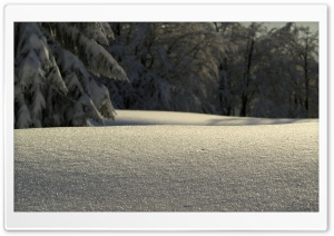 Untouched Snow HD Wide Wallpaper for Widescreen