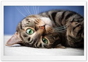 Upside Down Cat Ultra HD Wallpaper for 4K UHD Widescreen desktop, tablet & smartphone