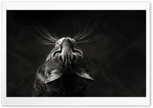 Upwards Ultra HD Wallpaper for 4K UHD Widescreen desktop, tablet & smartphone