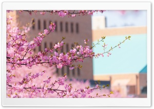 Urban Spring HD Wide Wallpaper for Widescreen