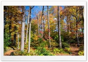 Usa Season Autumn Trees Ultra HD Wallpaper for 4K UHD Widescreen desktop, tablet & smartphone
