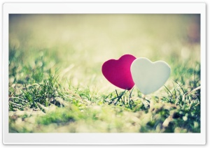 Valentines Day Hearts HD Wide Wallpaper for Widescreen