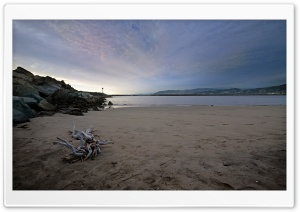 Ventura Beach Driftwood HD Wide Wallpaper for Widescreen