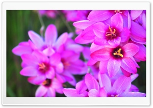 Vibrant Flowers HD Wide Wallpaper for Widescreen