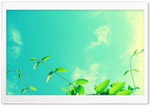 Vines and Sunny Sky HD Wide Wallpaper for Widescreen