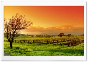 Vineyard At Sunset HD Wide Wallpaper for Widescreen