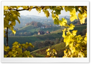 Vineyard near Gloss on the Wine Route, Styria, Austria HD Wide Wallpaper for Widescreen