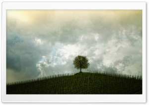 Vineyard Tree HD Wide Wallpaper for Widescreen