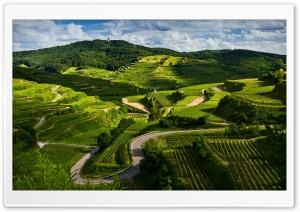 Vineyards HD Wide Wallpaper for Widescreen