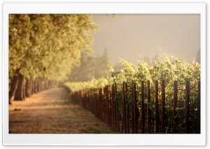 Vineyards HD Wide Wallpaper for 4K UHD Widescreen desktop & smartphone