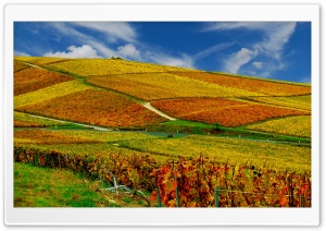 Vineyards Autumn Ultra HD Wallpaper for 4K UHD Widescreen desktop, tablet & smartphone