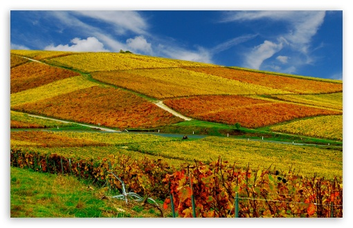 Vineyards Autumn HD wallpaper for Wide 16:10 5:3 Widescreen WHXGA WQXGA WUXGA WXGA WGA ; HD 16:9 High Definition WQHD QWXGA 1080p 900p 720p QHD nHD ; Standard 4:3 5:4 3:2 Fullscreen UXGA XGA SVGA QSXGA SXGA DVGA HVGA HQVGA devices ( Apple PowerBook G4 iPhone 4 3G 3GS iPod Touch ) ; Tablet 1:1 ; iPad 1/2/Mini ; Mobile 4:3 5:3 3:2 16:9 5:4 - UXGA XGA SVGA WGA DVGA HVGA HQVGA devices ( Apple PowerBook G4 iPhone 4 3G 3GS iPod Touch ) WQHD QWXGA 1080p 900p 720p QHD nHD QSXGA SXGA ; Dual 16:10 5:3 WHXGA WQXGA WUXGA WXGA WGA ;