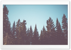 Vintage Fir Trees Forest HD Wide Wallpaper for Widescreen