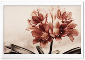 Vintage Flowers HD Wide Wallpaper for Widescreen