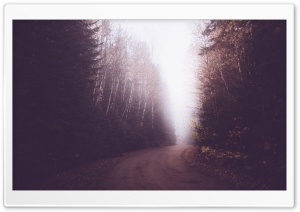 Vintage Foggy Forest Road HD Wide Wallpaper for Widescreen