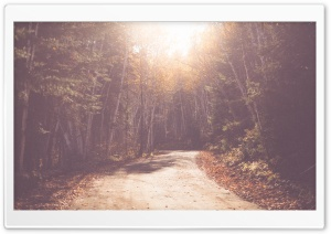 Vintage Forest Road HD Wide Wallpaper for Widescreen