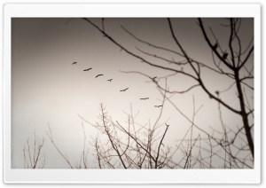 Vintage Geese HD Wide Wallpaper for Widescreen