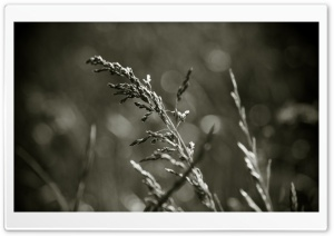 Vintage Grass Macro HD Wide Wallpaper for Widescreen