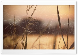 Vintage Grass Photo HD Wide Wallpaper for Widescreen