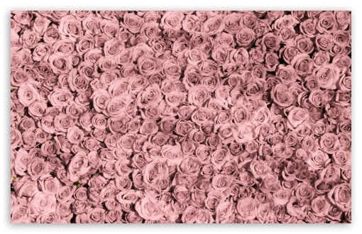 Vintage Pink Roses Tumblr ❤ 4K UHD Wallpaper for Wide 16:10 5:3 Widescreen WHXGA WQXGA WUXGA WXGA WGA ; 4K UHD 16:9 Ultra High Definition 2160p 1440p 1080p 900p 720p ; Standard 4:3 5:4 3:2 Fullscreen UXGA XGA SVGA QSXGA SXGA DVGA HVGA HQVGA ( Apple PowerBook G4 iPhone 4 3G 3GS iPod Touch ) ; Smartphone 5:3 WGA ; Tablet 1:1 ; iPad 1/2/Mini ; Mobile 4:3 5:3 3:2 16:9 5:4 - UXGA XGA SVGA WGA DVGA HVGA HQVGA ( Apple PowerBook G4 iPhone 4 3G 3GS iPod Touch ) 2160p 1440p 1080p 900p 720p QSXGA SXGA ; Dual 16:10 5:3 16:9 4:3 5:4 WHXGA WQXGA WUXGA WXGA WGA 2160p 1440p 1080p 900p 720p UXGA XGA SVGA QSXGA SXGA ;