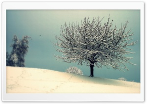 Vintage Winter Landscape HD Wide Wallpaper for Widescreen