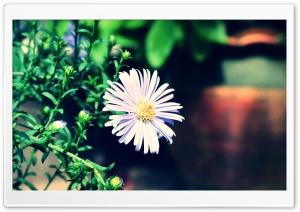 Violet Flower Ultra HD Wallpaper for 4K UHD Widescreen desktop, tablet & smartphone