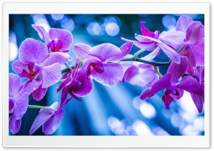 Violet Flowers With Bokeh HD Wide Wallpaper for Widescreen