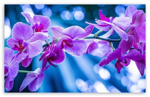 Violet Flowers With Bokeh ❤ 4K UHD Wallpaper for Wide 16:10 5:3 Widescreen WHXGA WQXGA WUXGA WXGA WGA ; 4K UHD 16:9 Ultra High Definition 2160p 1440p 1080p 900p 720p ; Standard 4:3 5:4 3:2 Fullscreen UXGA XGA SVGA QSXGA SXGA DVGA HVGA HQVGA ( Apple PowerBook G4 iPhone 4 3G 3GS iPod Touch ) ; Tablet 1:1 ; iPad 1/2/Mini ; Mobile 4:3 5:3 3:2 16:9 5:4 - UXGA XGA SVGA WGA DVGA HVGA HQVGA ( Apple PowerBook G4 iPhone 4 3G 3GS iPod Touch ) 2160p 1440p 1080p 900p 720p QSXGA SXGA ; Dual 4:3 5:4 UXGA XGA SVGA QSXGA SXGA ;