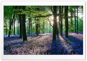 Violet Forest Flowers Field HD Wide Wallpaper for Widescreen