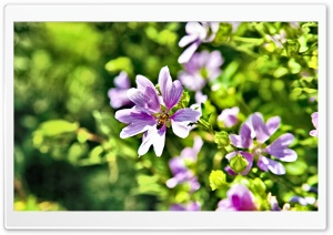 Violet Summer Flowers HD Wide Wallpaper for Widescreen