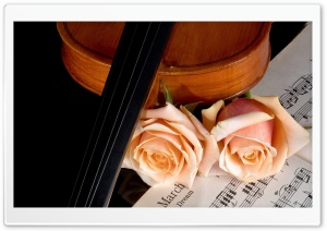 Violin And Peach Roses HD Wide Wallpaper for Widescreen