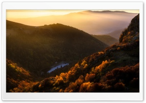 Vosges Mountains, Woodland,...