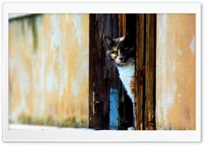 Waiting Cat HD Wide Wallpaper for Widescreen