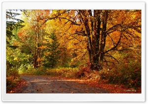 Walk into Fall HD Wide Wallpaper for Widescreen