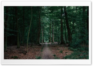 Free Desktop Walking In The Woods HD Wide