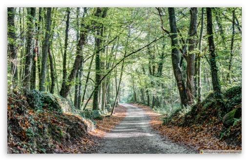 Download Walking the Path Fageda den Jord, Catalonia UltraHD Wallpaper