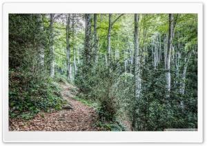 Walking Through La Grevolosa HD Wide Wallpaper for 4K UHD Widescreen desktop & smartphone