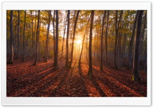 Warm Sunrise. Forest HD Wide Wallpaper for 4K UHD Widescreen desktop & smartphone