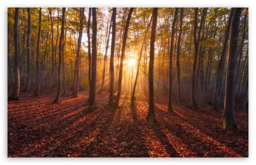 اجمل صور الصباح  Warm_sunrise__forest-t2