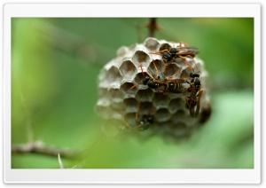 Wasp Hives HD Wide Wallpaper for Widescreen